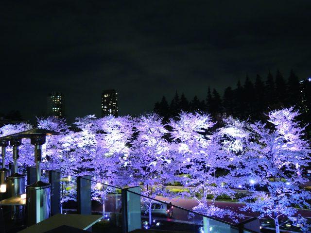 桜_テラス_夜